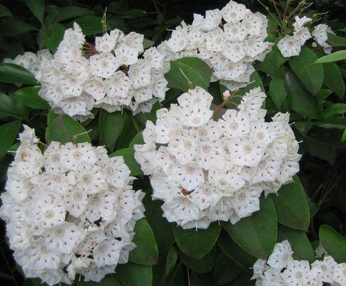 白い花の木第2弾.jpg