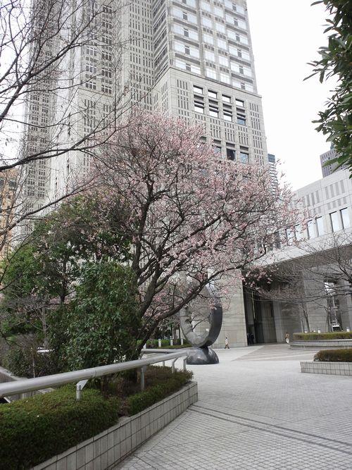 都庁の紅梅.jpg